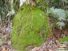 moss_cabbage_palm.jpg