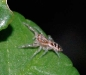 jumpingspider_view2-20111130