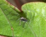 spider_with_fly_20120213