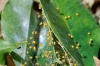 spiderlets_yellow_20111109