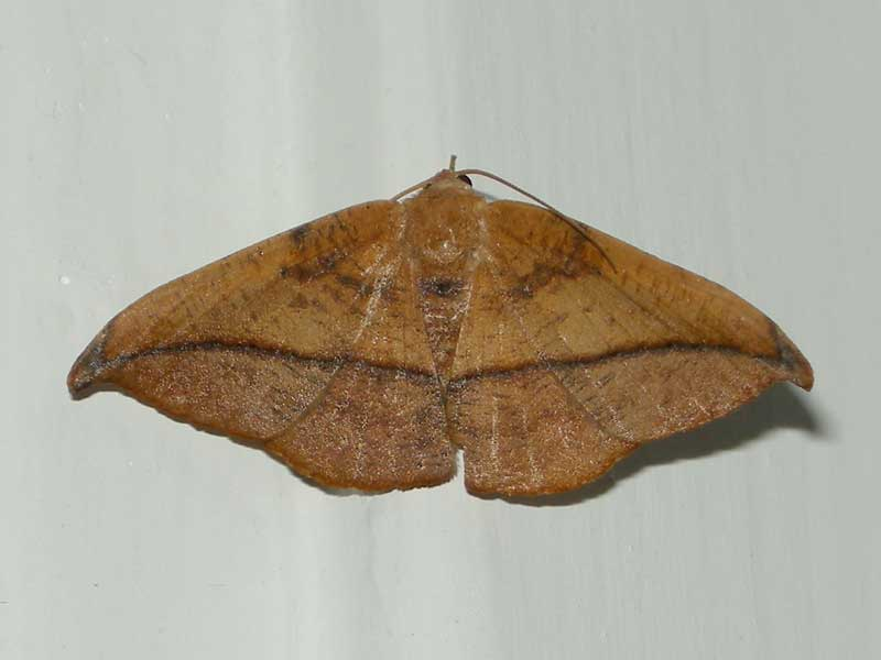 unknown-moth-1