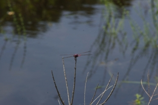 dragonfly_20120830
