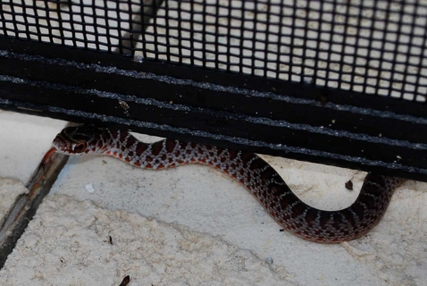 baby_snake_markings