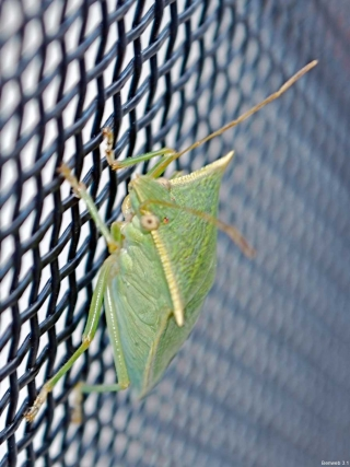 bug_sideview_2011119