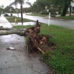 Fallen tree. Boca Raton, FL, June 30, 2011. Eric is splashing in the deep driveway puddle.