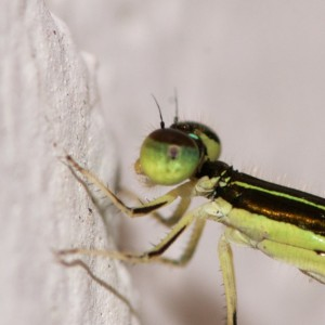 The eye is not in perfect focus, but the thorax and the rest of the body are crisp and clear.