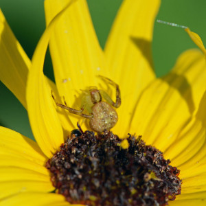 So long, and thanks for stopping by. (The beetle is visible to the lower left of the spider.)