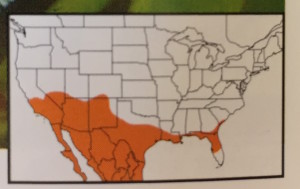 Range map of White checkered-skipper in Glassberg (2012). South Florida is excluded.
